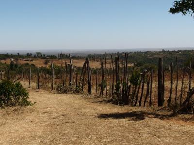 Hvide højland Kenya